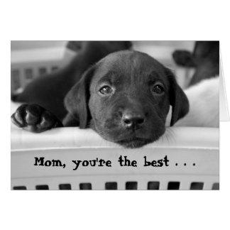 Mamá, usted es el mejor… tarjetas