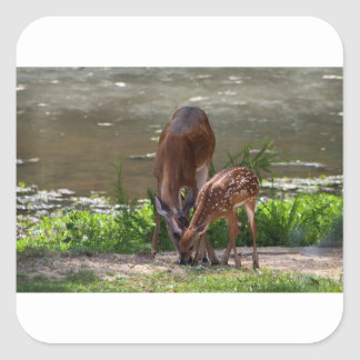 Mama Whitetail Deer and Fawn Square Sticker
