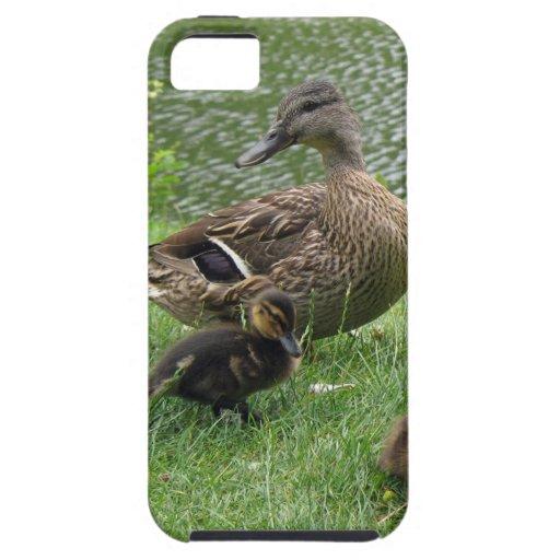 Mamá y anadones del pato iPhone 5 carcasa