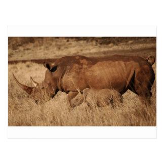 Mamá y bebé africanos del rinoceronte postal