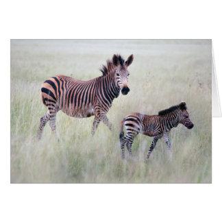 Mamá y bebé de la cebra felicitación