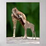 Mamá y bebé de la jirafa impresiones