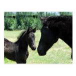 Mamá y bebé del amor del caballo tarjetas postales