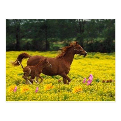 mamá y bebé del caballo tarjeta postal