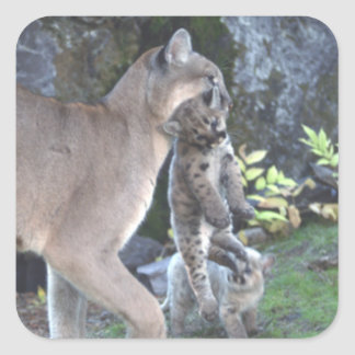Mamá y Cubs del puma Pegatina Cuadrada