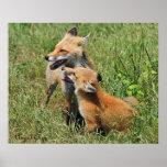 Mamá y equipo del Fox rojo Posters