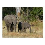 Mamá y postal feliz del becerro del elefante