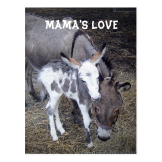 Mama's Love Post Card