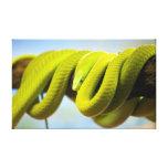Mamba verde impresiones en lienzo estiradas
