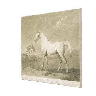 Mambrino, after George Stubbs, 1788 (mezzotint) Canvas Print