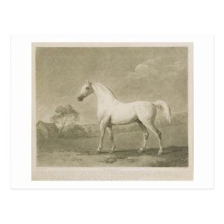 Mambrino, after George Stubbs, 1788 (mezzotint) Postcard
