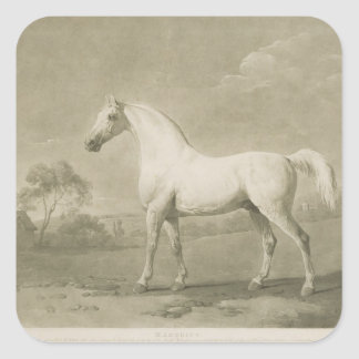 Mambrino, after George Stubbs, 1788 (mezzotint) Square Sticker