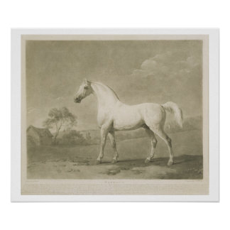 Mambrino, después de George Stubbs, 1788 (mezzotin Posters