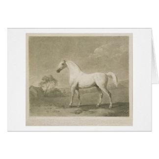 Mambrino, después de George Stubbs, 1788 (mezzotin Felicitación