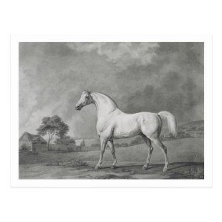 Mambrino, engraved by George Townley Stubbs (1756- Postcard