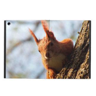 Mamífero del roedor de la ardilla