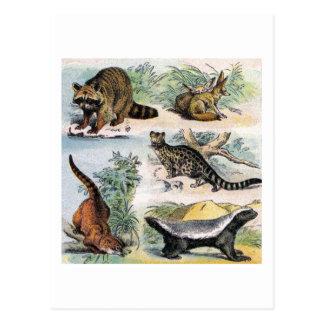 Mamíferos:  cinco pequeños ejemplos postal