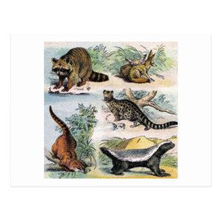 Mamíferos:  cinco pequeños ejemplos postales