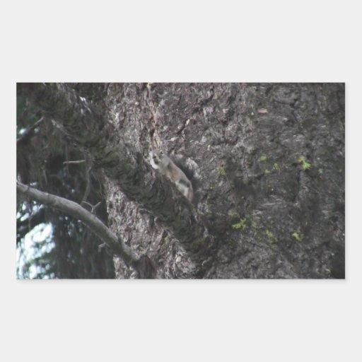 Mamíferos de la fauna de Idaho del barranco de los Rectangular Altavoz