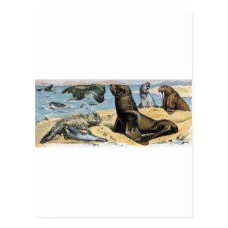 Mamíferos del océano tarjeta postal