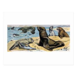 Mamíferos del océano tarjetas postales