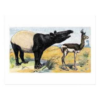 Mamíferos:  tapir y gazelle postal