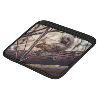 Mammal Themed, A Chubby Squirrel Perches On The Br iPad Sleeves