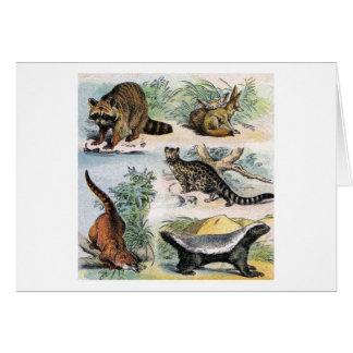 Mammals:  five small illustrations card