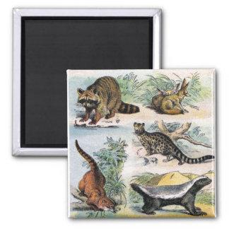 Mammals:  five small illustrations refrigerator magnet