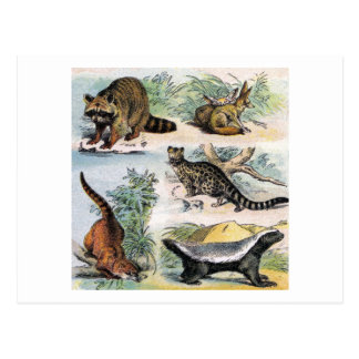 Mammals:  five small illustrations postcard