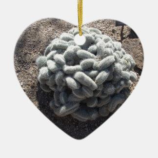 Mammillaria Cactus Ceramic Ornament