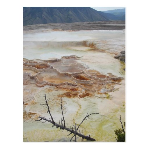 Mammoth Hot Springs Post Cards