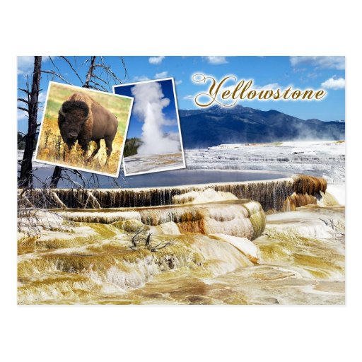 Mammoth Hot Springs, Yellowstone National Park Postcards