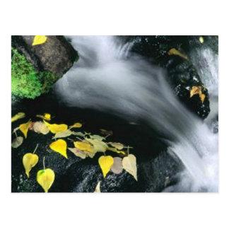 Mammoth Mountain Falls Postcard