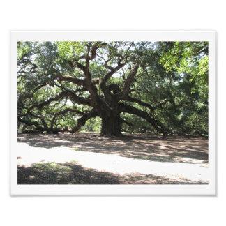 Mammoth Oak Photo Print