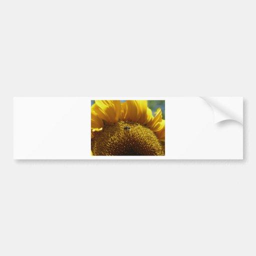 mammoth sunflower 2 car bumper sticker