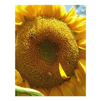 mammoth sunflower full color flyer