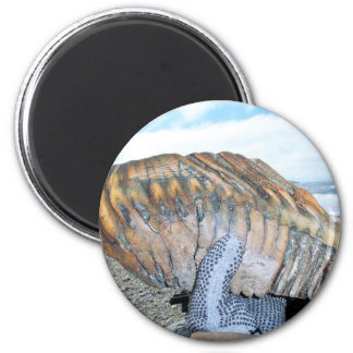 mammoth tooth in alaska 09 magnet