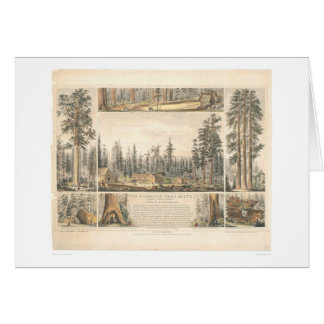 Mammoth Tree Grove (0976A) Card