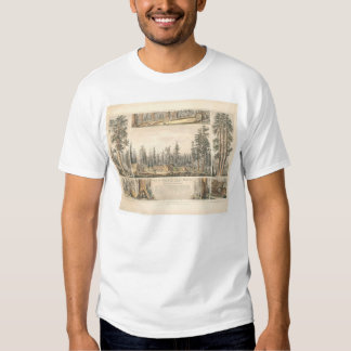 Mammoth Tree Grove (0976A) Tee Shirt