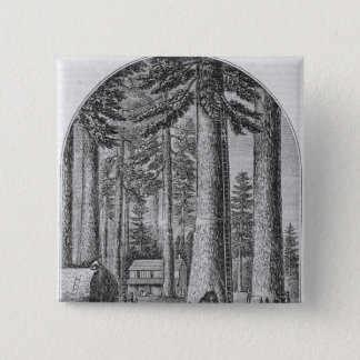 Mammoth tree grove in the Valley of the Pinback Button