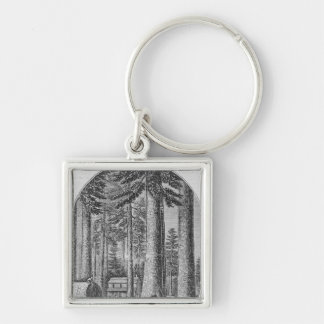Mammoth tree grove in the Valley of the Silver-Colored Square Keychain