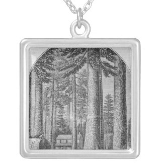 Mammoth tree grove in the Valley of the Silver Plated Necklace