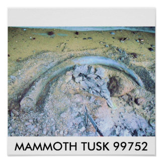 mammoth tusk (2), MAMMOTH TUSK 99752 Poster