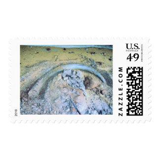 mammoth tusk in kotz ak stamp