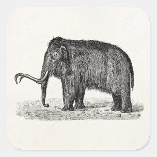 Mamuts lanosos del ejemplo del mamut lanoso del pegatina cuadrada