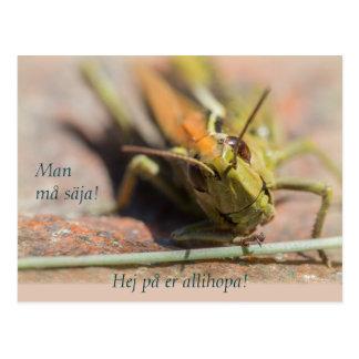 Man må säja! Gräshoppa med personlighet CC0775 Postcard