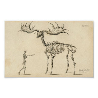 Man Moose Vintage Poster