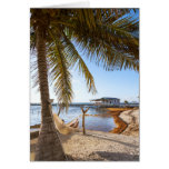 Man Relaxing In A Hammock Under Palm Tree, Belize Card