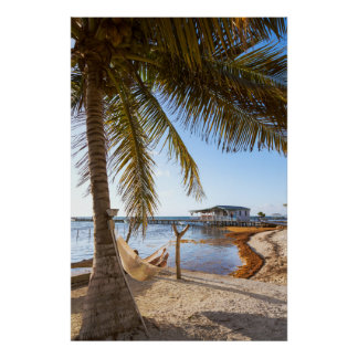 Man Relaxing In A Hammock Under Palm Tree, Belize Poster